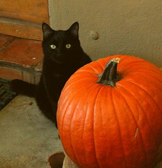 Black Cat Pumpkin | by cobalt123