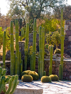Beautiful Cactus Garden | by JRErickson