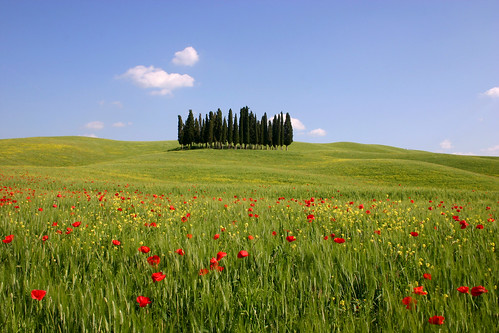 Tuscan Poppies | by phil dokas