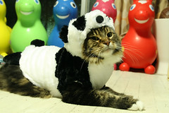 Panda cat | by fox_kiyo
