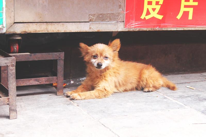 PBFT_China_Xi'an_3