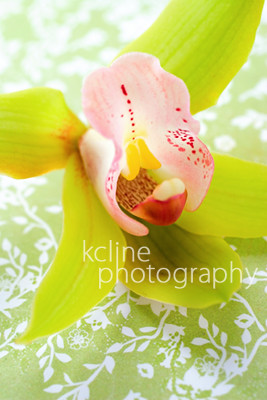 Green Orchid | by kcline
