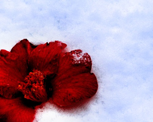 Blood Red, Sister Snow | by Wyrd