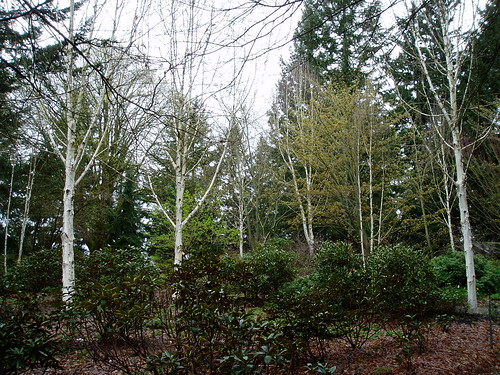Birch Grove | by RHR Horticulture