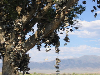 shoe tree | by swedelife