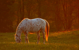 An Equine Sunset. | by BamaWester