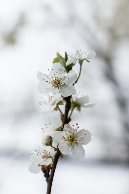 spring | lili weissensteiner