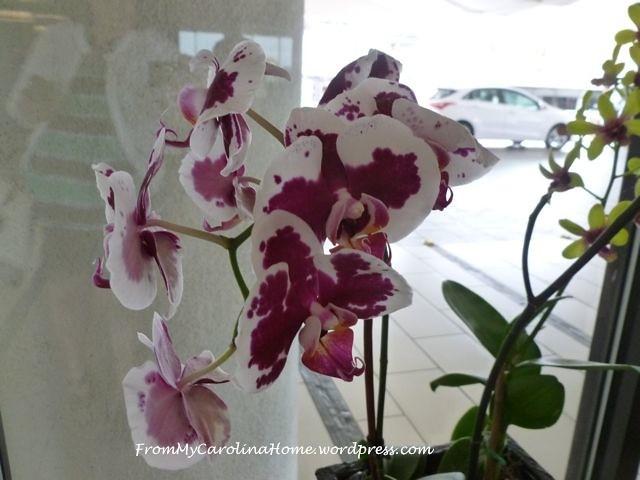 Orchids 5