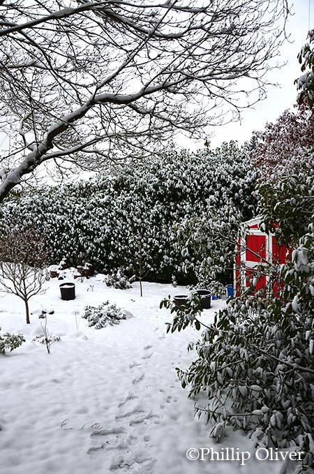 snow121516k