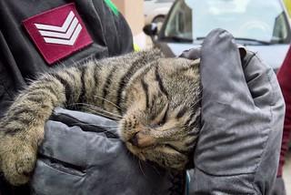 Noicattaro. Gatto salvato front