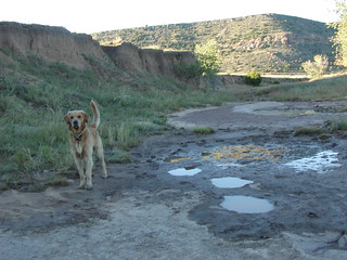 Zephyr and the dinosaur prints at Black Mesa | by americasroof