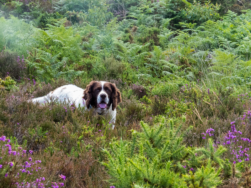Max in the heather