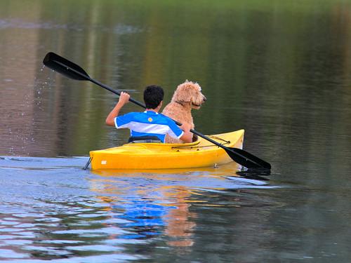Doggy Paddle 20170106