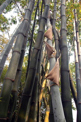 Bamboo grove in South-east Asia