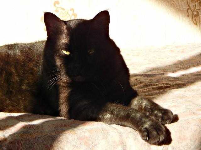 чёрный кот Муся на солнце 3| Musia the black cat