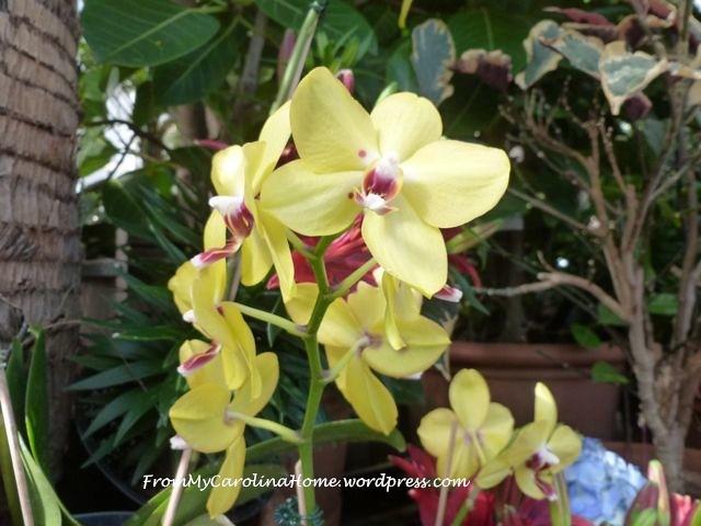 Orchid Garden 7