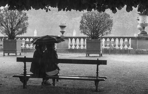 Under the rain sous la pluie l 39 abri d 39 un arbre for Arbres jardin du luxembourg