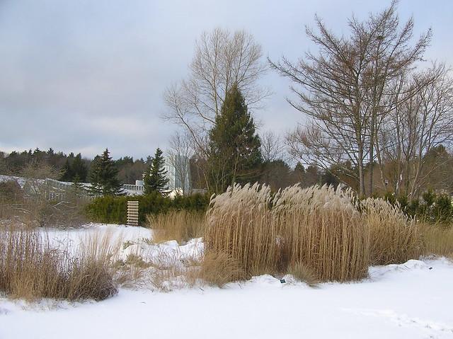 Tallinn Botaical Garden