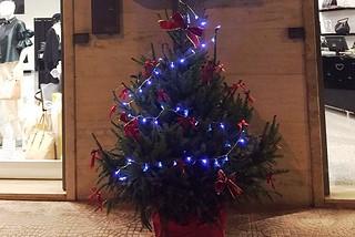 Noicattaro. Addobbi natalizi front