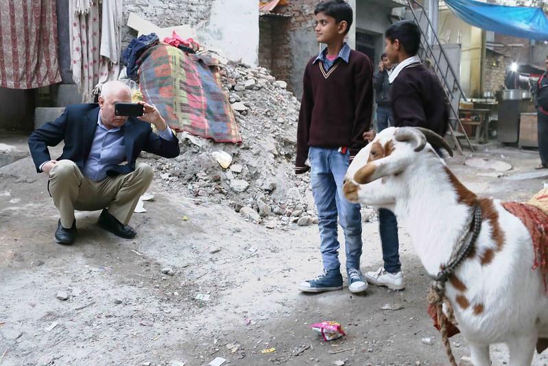 City Life - Cold Goats Wear Prada, Walled City