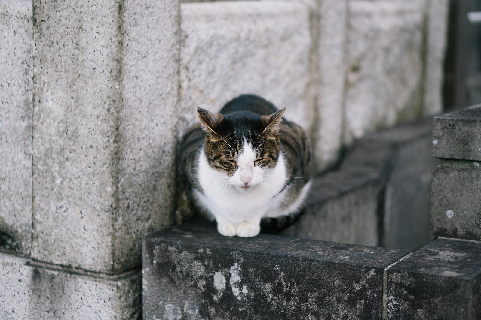 行儀の良い猫