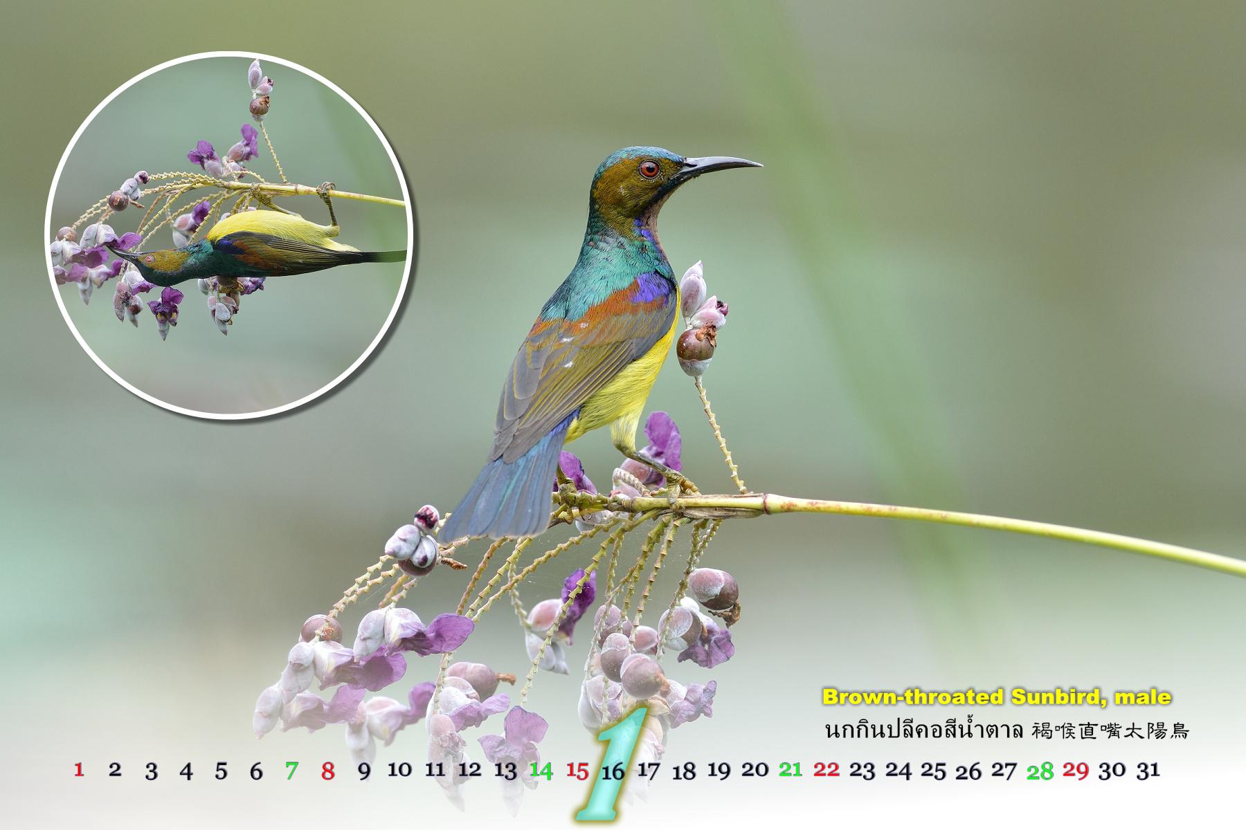 Thai Bird Calendar 2017_01