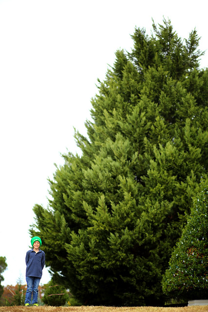 found our tree