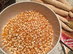 popcorn IMG_9801b