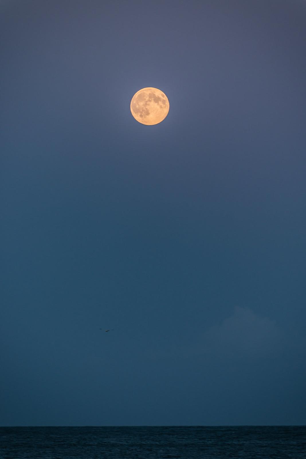 Mond am Meer