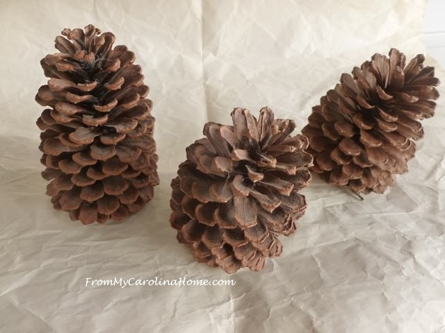 Pine Cone Project 1
