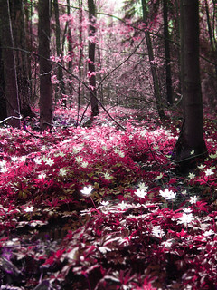 Magic forest: Pink | by Sameli