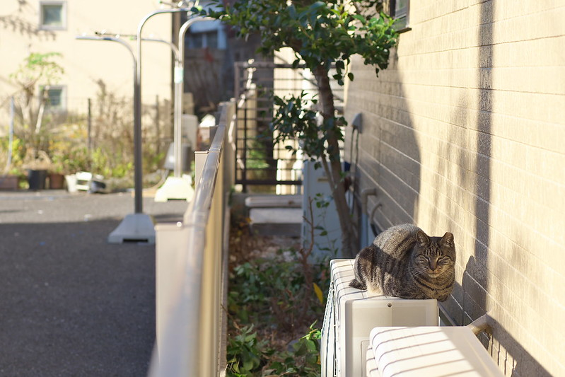 東京路地裏散歩 谷根千・上野 2016年12月28日