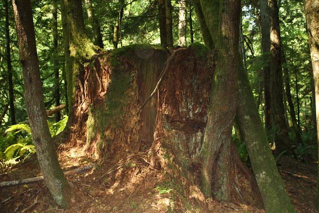 2015-07-06 Stimson hike 011