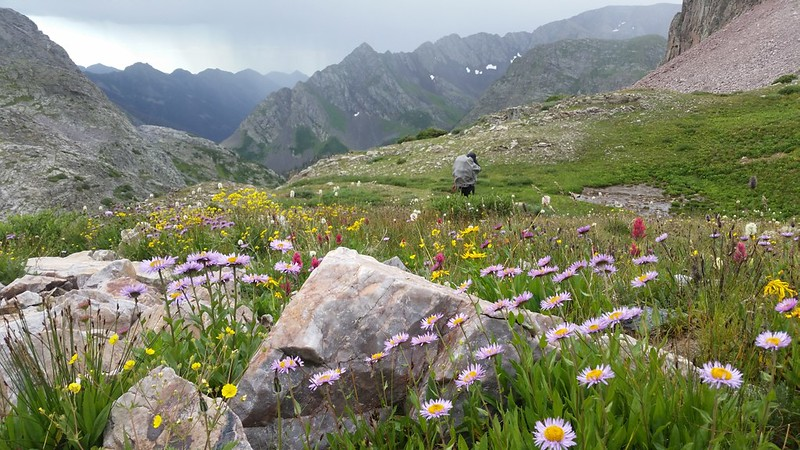 Wildflowers on the stormy pass as we head down toward the Moon Lakes