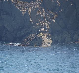 048 Boottocht rond Ile-de-Brehat zeehond