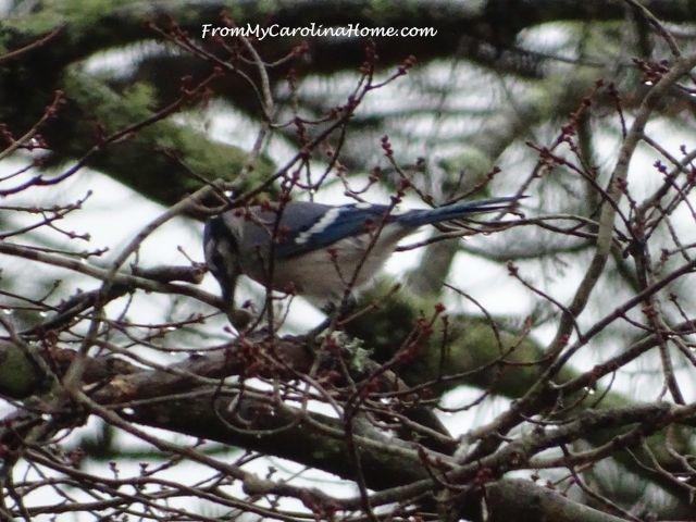 December Bird visitors 1