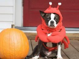 pet_in_costume