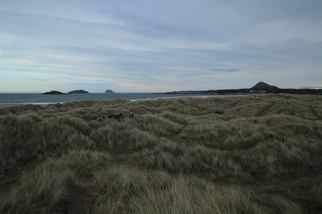 Beautiful Yellowcraigs 23
