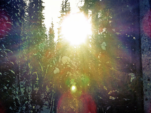 Mt Revelstoke with the sun shining through the trees run through the photo app Stackables