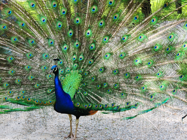 Best Photos Of 2016: Peacock in the garden of Eggenberg Palace, Graz, Austria