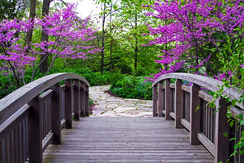 The Bridge to Spring | by WisDoc