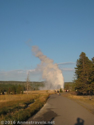 Old Faithful Geyser erupts from afar, Upper Geyser Basin in Yellowstone National Park, Wyoming