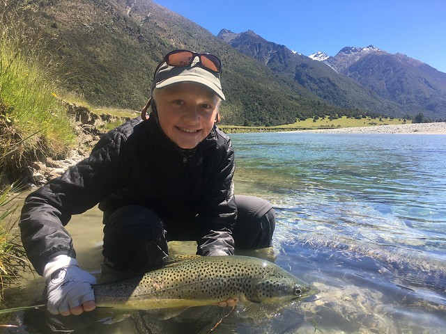 South Island Brown Trout