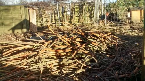 firewood Jan 17