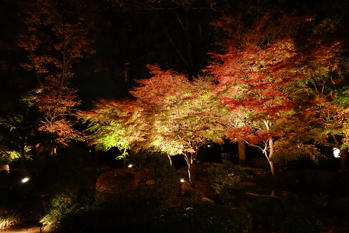 Colored leaves night garden