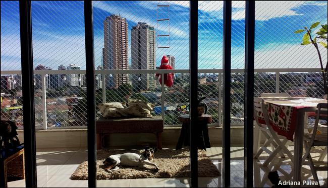 Apartamento endereço moradia lar familiares bichos Fox paulistinha mais amado GYN Goiânia