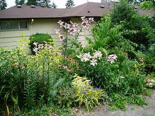 Mixed Border July 25 | by RHR Horticulture
