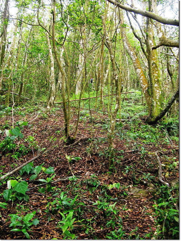 拉號山開墾區雜木林上坡地形