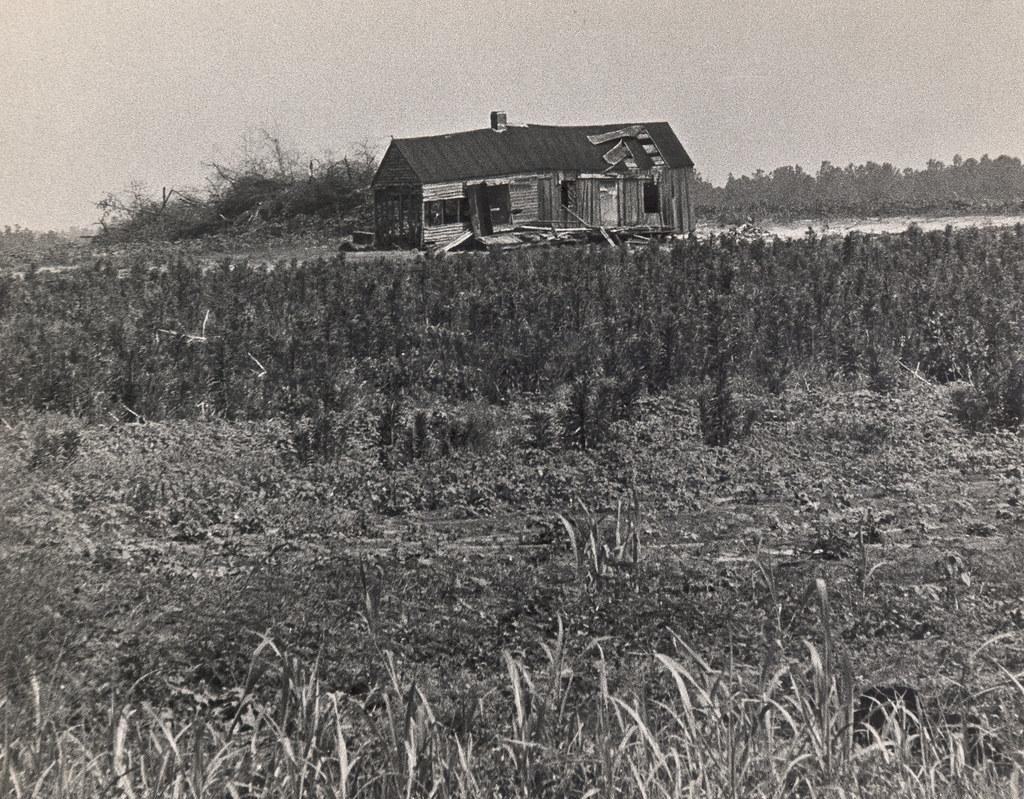 Rural landscape outside Augusta, Georgia #1, 1970's