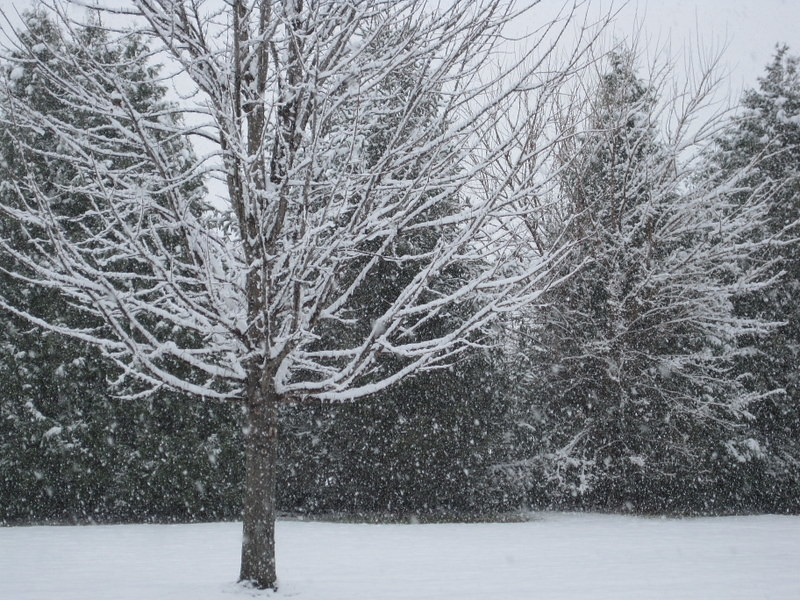 1st snow 2016 (1)